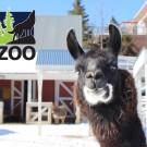 Photo courtesy of Lake Superior Zoo.