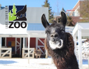 Photo courtesy of Lake Superior Zoo.